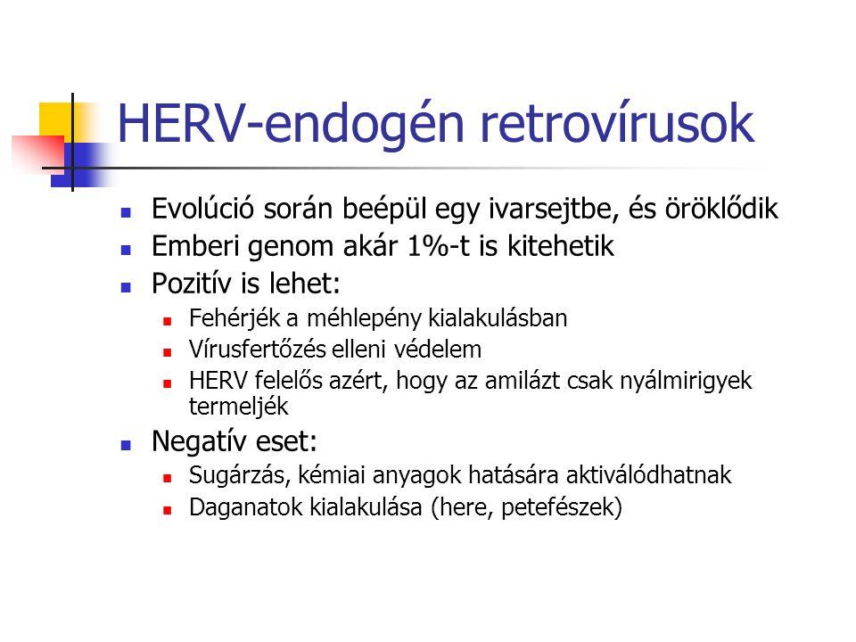 HERV-endogén retrovírusok Evolúció során beépül egy ivarsejtbe, és öröklődik Emberi genom akár 1%-t is kitehetik Pozitív is lehet: Fehérjék a méhlepén