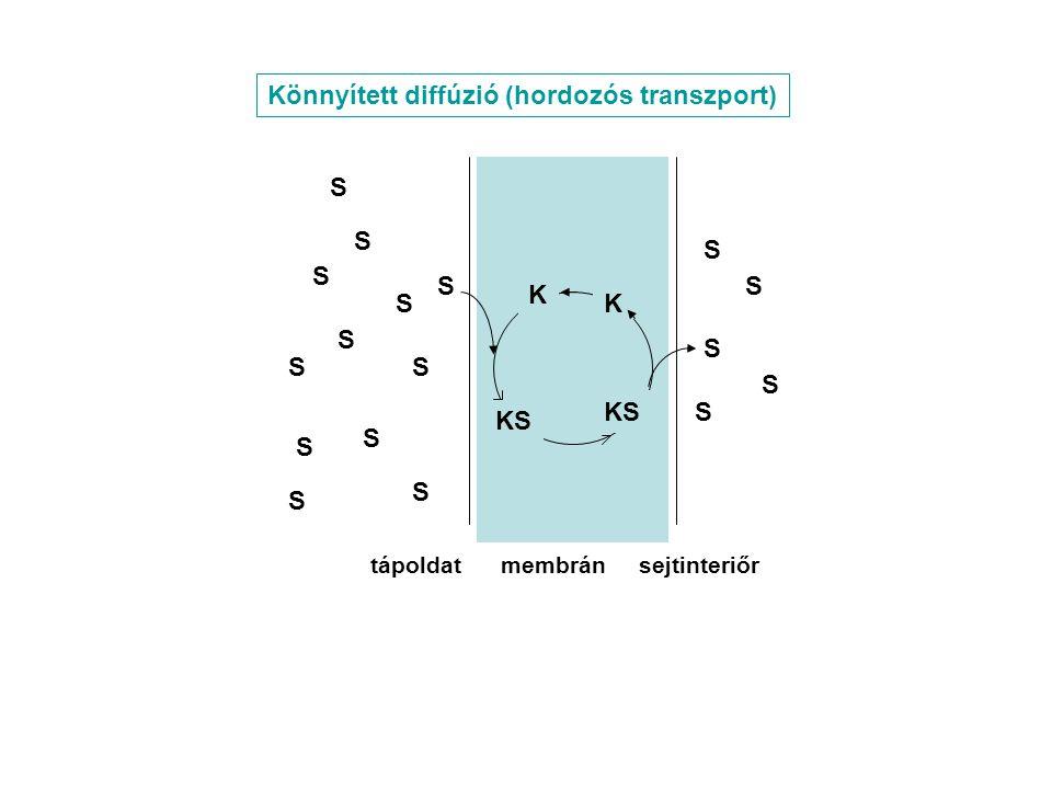 tápoldat membrán sejtinteriőr S S S S S S S S S S S S S S S S K K KS S Könnyített diffúzió (hordozós transzport)