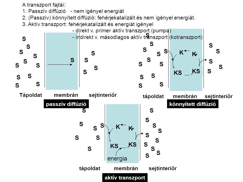 A sejteket körülölelő CM és a sejten belüli membránszerkezetek (mitokondrium, endoplazmatikus retikulum, Golgi készülék, vakuolumok) mind megannyi transzport gátat jelentenek a különböző molekulák számára, elsősorban lipid-kettősréteg szerkezetük miatt.