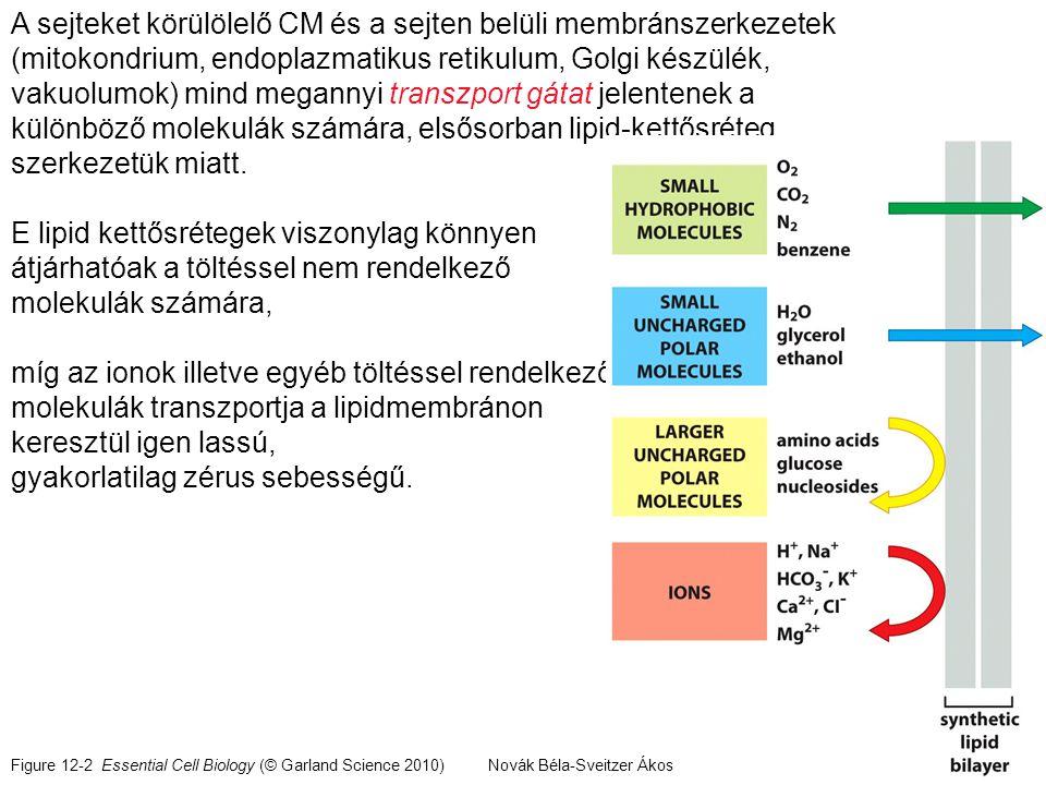 M E M B R Á N SeSe ES e ES i SiSi k1k1 k2k2 k3k3 k3k3 k5k5 k6k6 A szubsztrát felvétel és leadás egyensúlyát a komplexek disszociációs állandóival lehet jellemezni: K s =k 2 /k 1 = k 5 /k 6 Az egyensúlyok k 1.