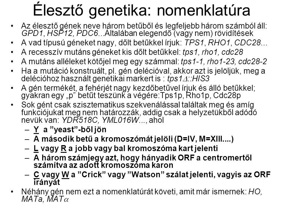 Élesztő genetika: nomenklatúra Az élesztő gének neve három betűből és legfeljebb három számból áll: GPD1, HSP12, PDC6...Általában elegendő (vagy nem) rövidítések A vad típusú géneket nagy, dőlt betűkkel írjuk: TPS1, RHO1, CDC28...