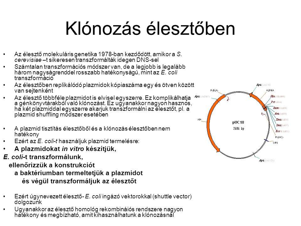 Klónozás élesztőben Az élesztő molekuláris genetika 1978-ban kezdődött, amikor a S.
