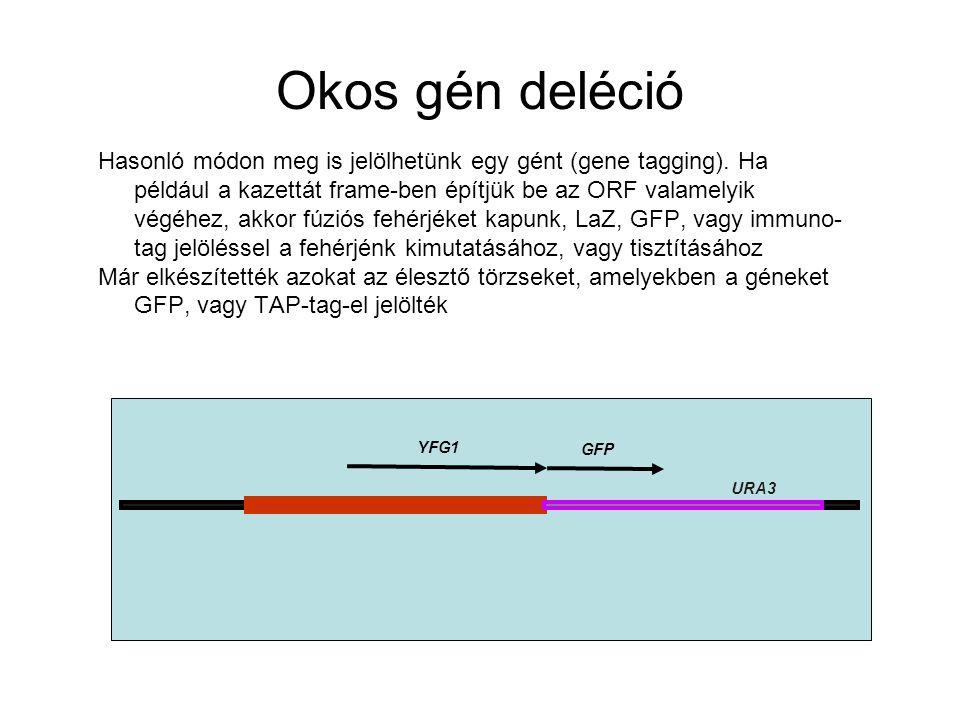 Okos gén deléció Hasonló módon meg is jelölhetünk egy gént (gene tagging).