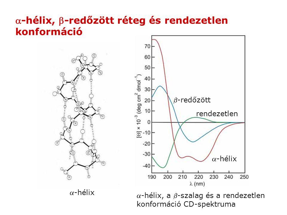 -hélix -hélix, -redőzött réteg és rendezetlen konformáció -hélix, a -szalag és a rendezetlen konformáció CD-spektruma -hélix -redőzött rendezet
