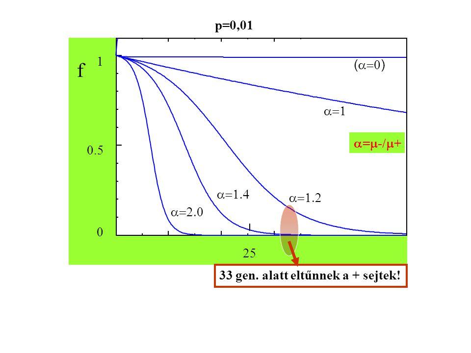 f     1 0.5 0 25 (  ) 33 gen. alatt eltűnnek a + sejtek! p=0,01  =  -/  +