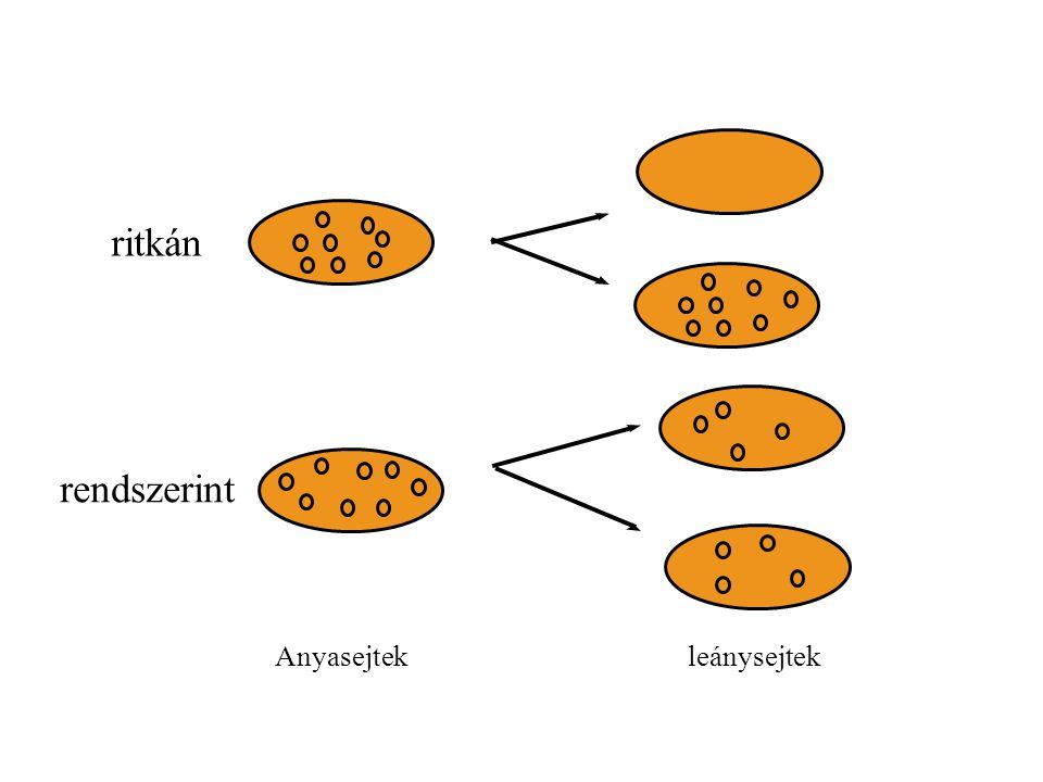 ritkán rendszerint Anyasejtek leánysejtek