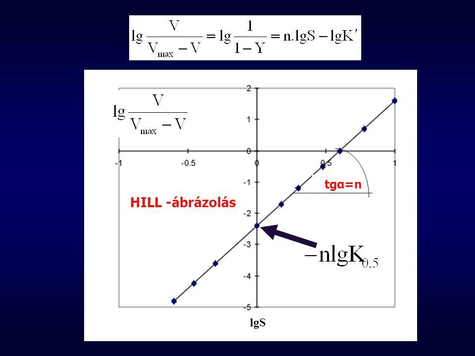 tgα=n lgS HILL -ábrázolás