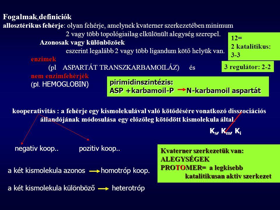 Fogalmak, definiciók allosztérikus fehérje: olyan fehérje, amelynek kvaterner szerkezetében minimum 2 vagy több topológiailag elkülönült alegység szer