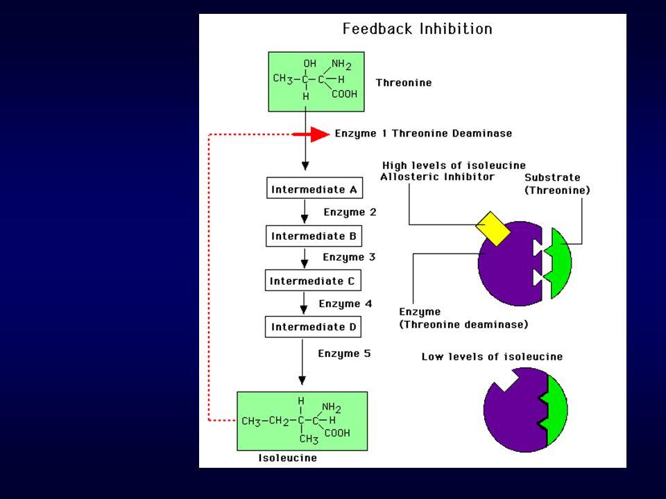 Egy szigmoid V-S karakterű enzimnél a 90%-os telítettséget biztosító szubsztrát koncentrációnak és a 10%-os telítettséget biztosító szubsztrát koncentrációnak a hányadosa 7.