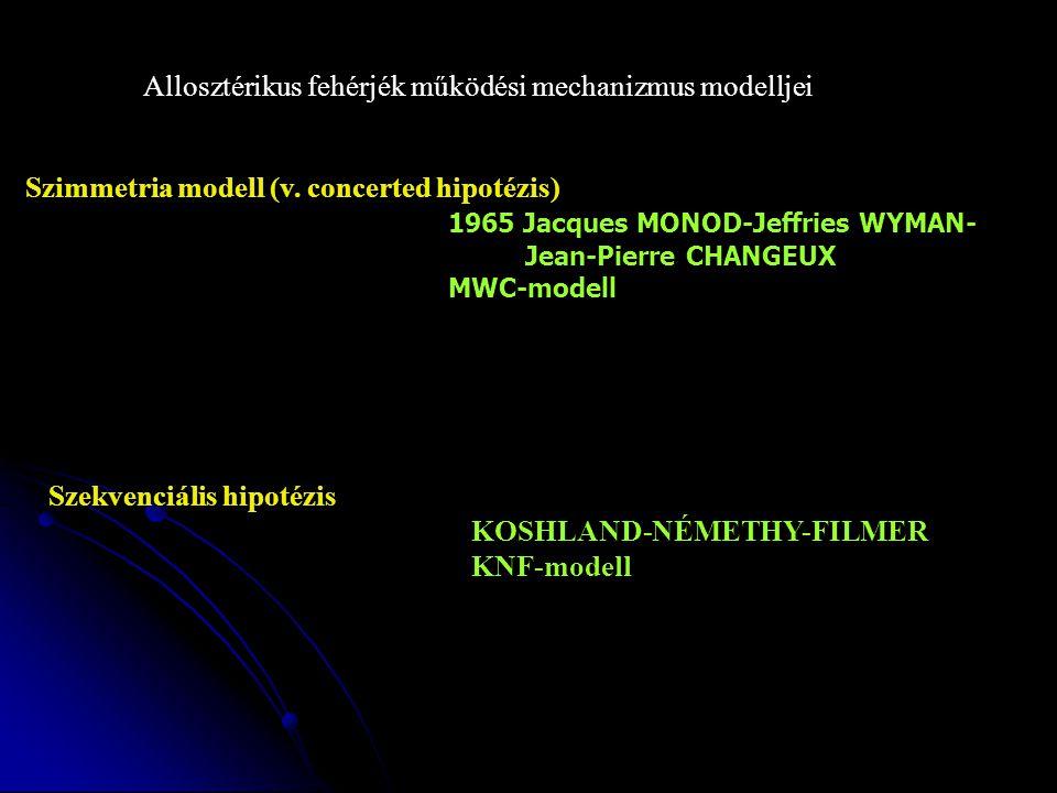 Allosztérikus fehérjék működési mechanizmus modelljei Szimmetria modell (v.