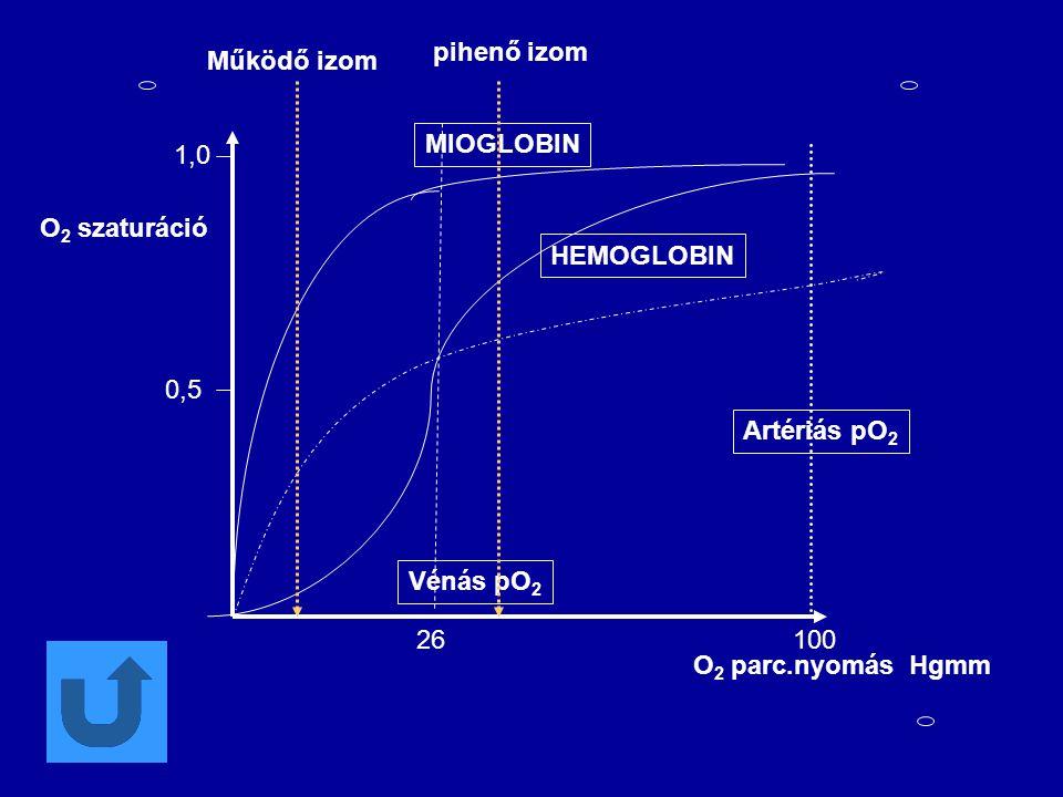 0,5 1,0 26100 MIOGLOBIN HEMOGLOBIN Artériás pO 2 Vénás pO 2 O 2 parc.nyomás Hgmm O 2 szaturáció Működő izom pihenő izom