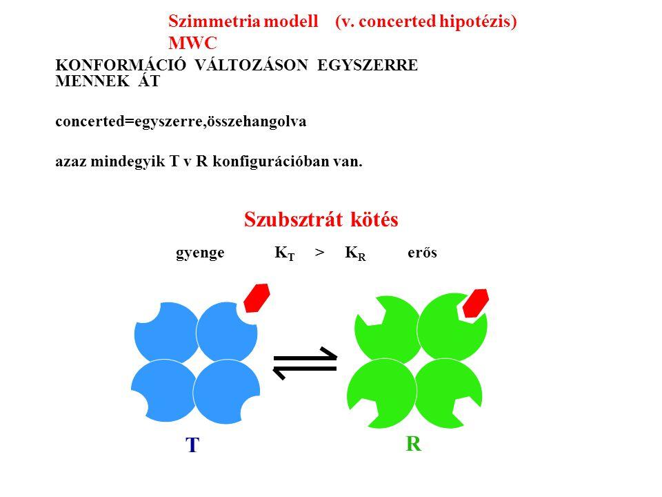 Szubsztrát kötés T R gyenge K T > K R erős KONFORMÁCIÓ VÁLTOZÁSON EGYSZERRE MENNEK ÁT concerted=egyszerre,összehangolva azaz mindegyik T v R konfigurációban van.