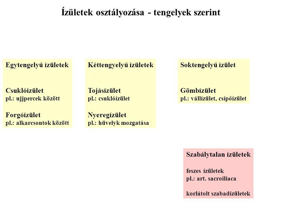 Ízületek osztályozása - tengelyek szerint Egytengelyű ízületek Csuklóízület pl.: ujjpercek között Forgóízület pl.: alkarcsontok között Kéttengyelyű íz