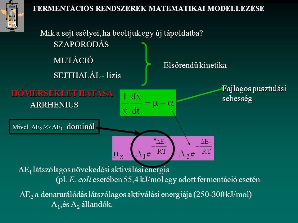 FERMENTÁCIÓS RENDSZEREK MATEMATIKAI MODELLEZÉSE  E 1 látszólagos növekedési aktiválási energia (pl. E. coli esetében 55,4 kJ/mol egy adott fermentáci
