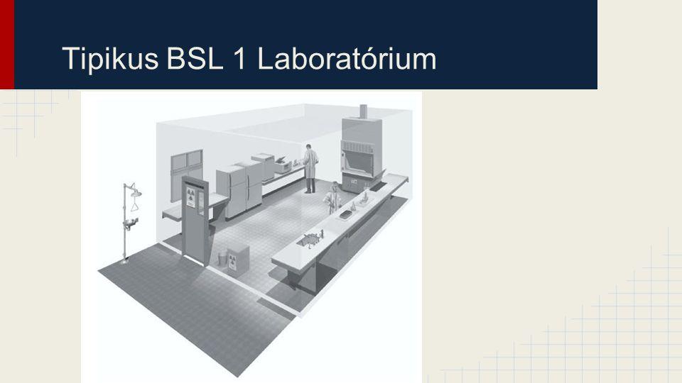 Tipikus BSL 1 Laboratórium
