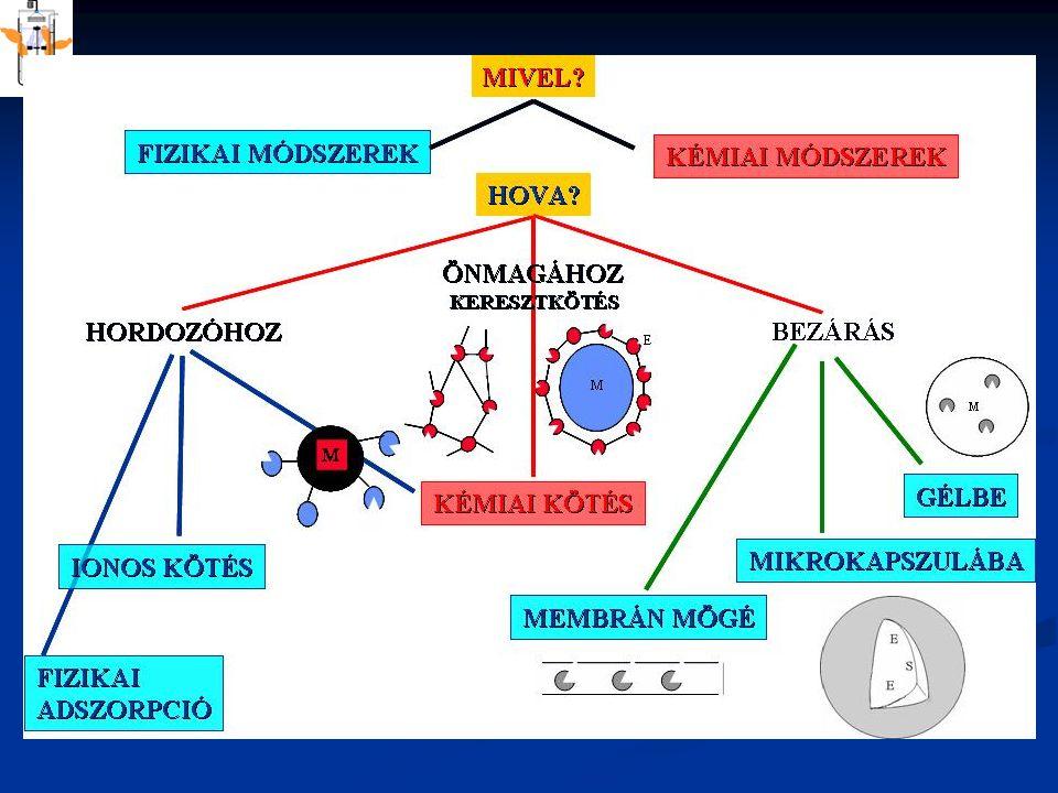 RÖGZITETT ENZIMEK KINETIKÁJA stagnáló folyadékfilm SoSo KÜLSŐ BELSŐ ANYAGÁTADÁS REAKCIÓ hordozó részecske E+S D D K K=konvekció D=diffúzió 1.konvektív transzport folyadék fõtömegébõl a rögz.