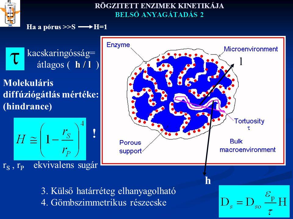 RÖGZITETT ENZIMEK KINETIKÁJA BELSŐ ANYAGÁTADÁS 2 kacskaringósság= h / l átlagos ( h / l ) h l r S, r P ekvivalens sugár Molekuláris diffúziógátlás mértéke: (hindrance) 3.
