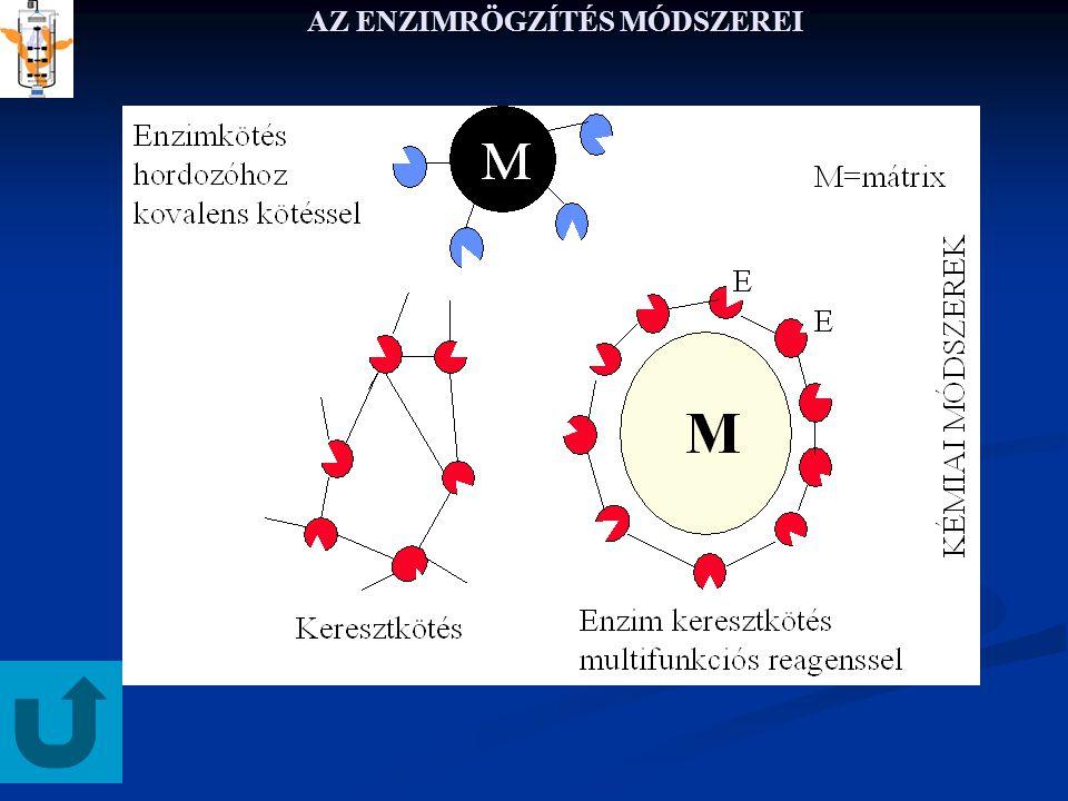 RÖGZITETT ENZIMEK KINETIKÁJA BELSŐ ANYAGÁTADÁS 7 Visszaírva S-t ha r = 0 akkor S=0, → C 2 = 0 a másik peremfeltételbõl C 1 kiszámítható: Végső megoldás 0-ad rendű reakciónál AHOL S NULLÁVÁ VÁLIK, MÁR NINCS REAKCIÓ KRITIKUS SUGÁR