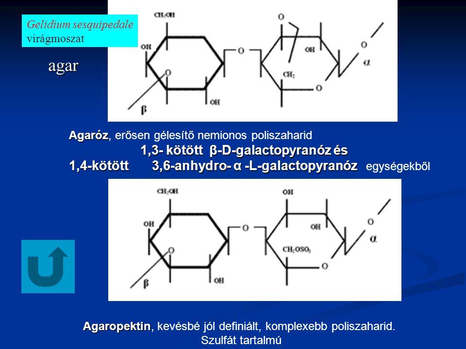 Agaropektin Agaropektin, kevésbé jól definiált, komplexebb poliszaharid.