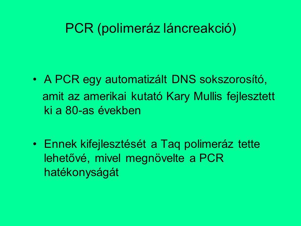 PCR (polimeráz láncreakció) A PCR egy automatizált DNS sokszorosító, amit az amerikai kutató Kary Mullis fejlesztett ki a 80-as években Ennek kifejles