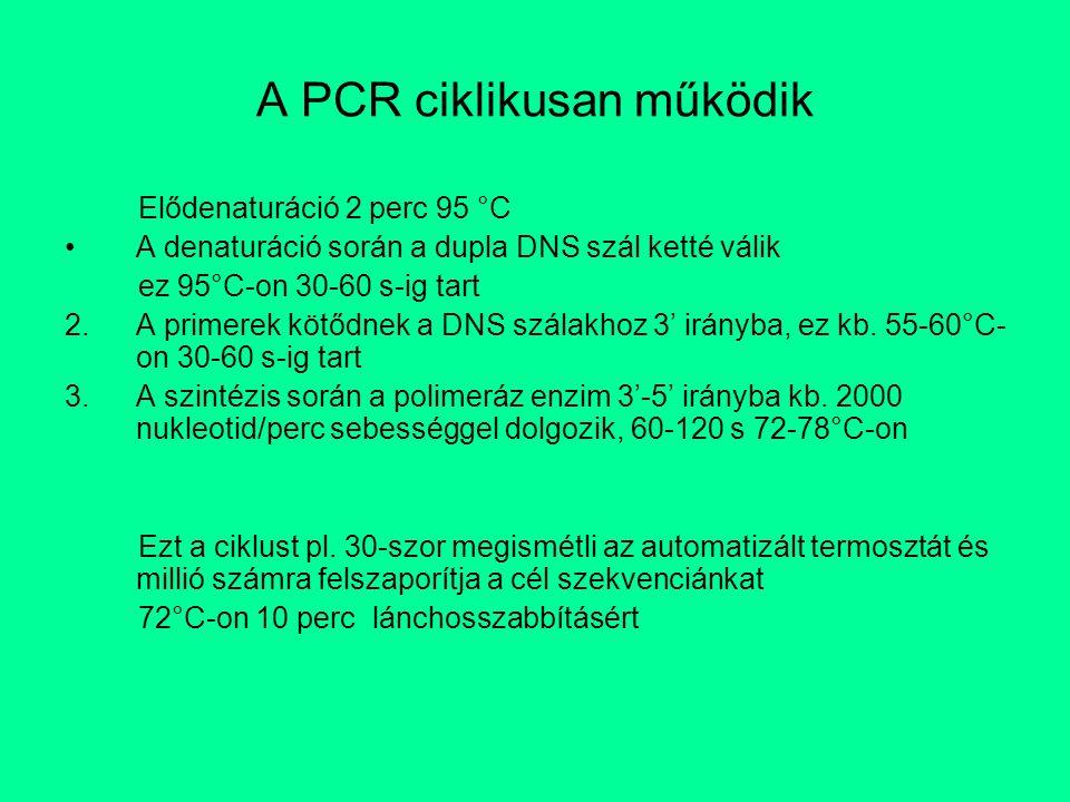 A PCR ciklikusan működik Elődenaturáció 2 perc 95 °C A denaturáció során a dupla DNS szál ketté válik ez 95°C-on 30-60 s-ig tart 2.A primerek kötődnek