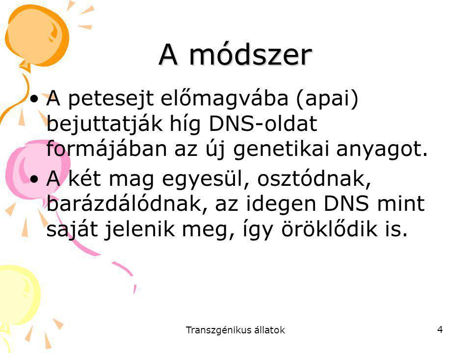 Transzgénikus állatok 4 A módszer A petesejt előmagvába (apai) bejuttatják híg DNS-oldat formájában az új genetikai anyagot. A két mag egyesül, osztód