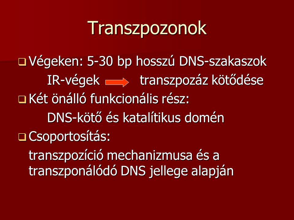 Transzpozonok 1.Transzpozíció:közvetlen/közvetett insertált szekvenciák és retroelemek 2.Képződés helye szerint: - konzervatív transzpozíció - replikatív transzpozíció - retropozíció Jelentőség: természetes és mesterséges mutációk, daganatok kialakulása