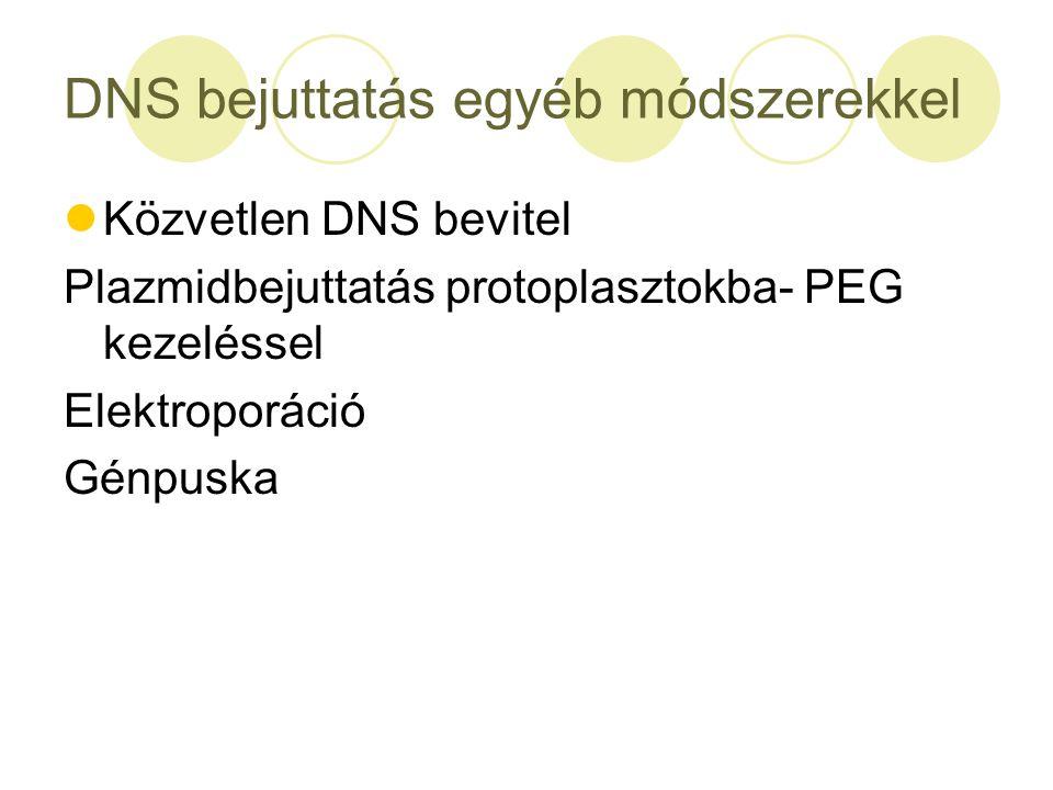 DNS bejuttatás egyéb módszerekkel Közvetlen DNS bevitel Plazmidbejuttatás protoplasztokba- PEG kezeléssel Elektroporáció Génpuska