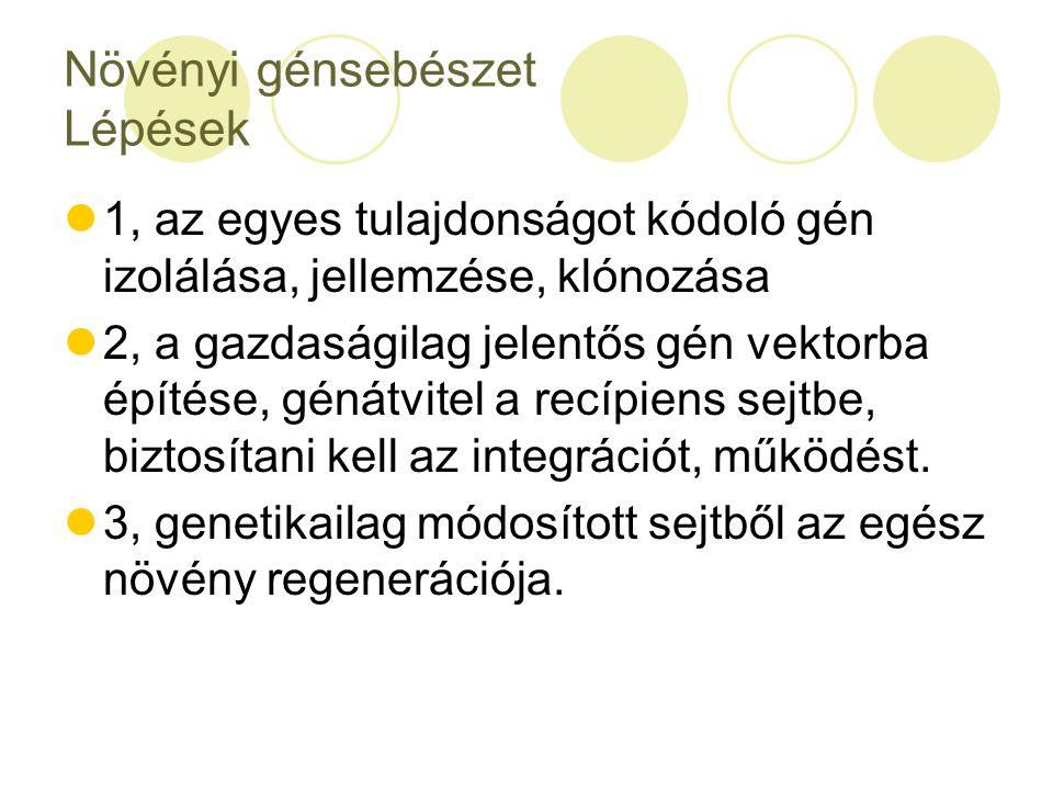 Növényi génsebészet Lépések 1, az egyes tulajdonságot kódoló gén izolálása, jellemzése, klónozása 2, a gazdaságilag jelentős gén vektorba építése, gén