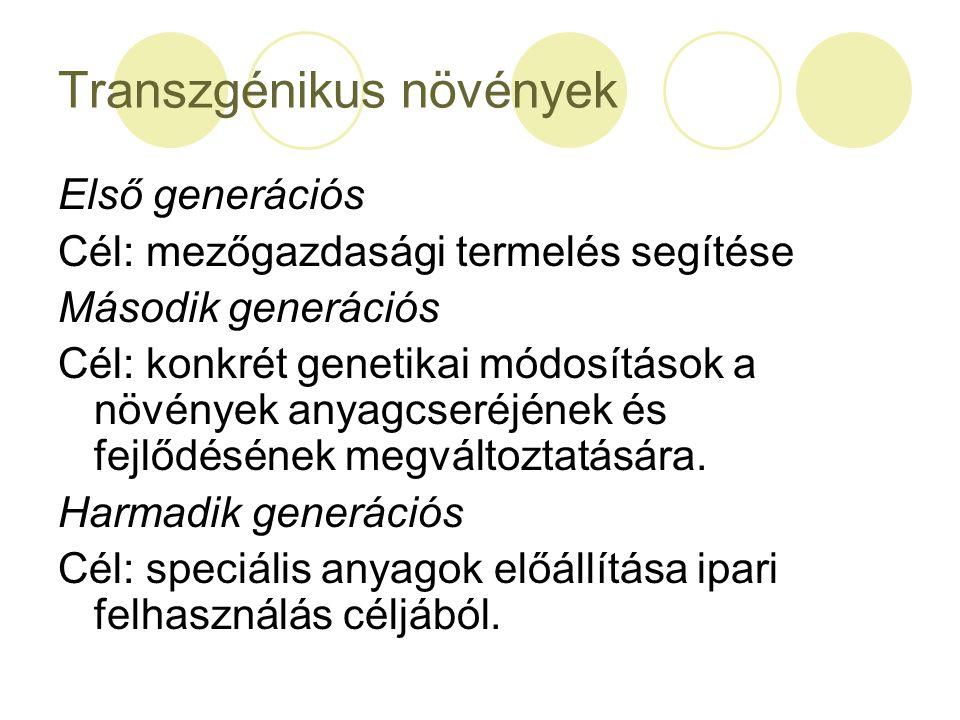 Transzgénikus növények Első generációs Cél: mezőgazdasági termelés segítése Második generációs Cél: konkrét genetikai módosítások a növények anyagcser