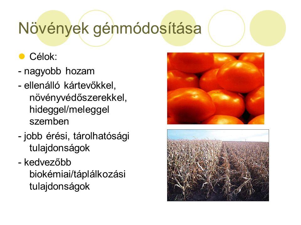 Növények génmódosítása Célok: - nagyobb hozam - ellenálló kártevőkkel, növényvédőszerekkel, hideggel/meleggel szemben - jobb érési, tárolhatósági tula