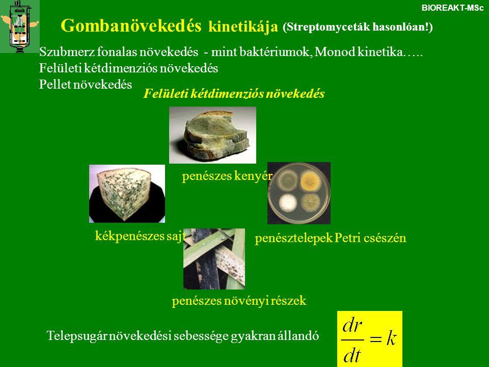 BIOREAKT-MSc Gombanövekedés kinetikája (Streptomyceták hasonlóan!) Szubmerz fonalas növekedés - mint baktériumok, Monod kinetika….. Felületi kétdimenz