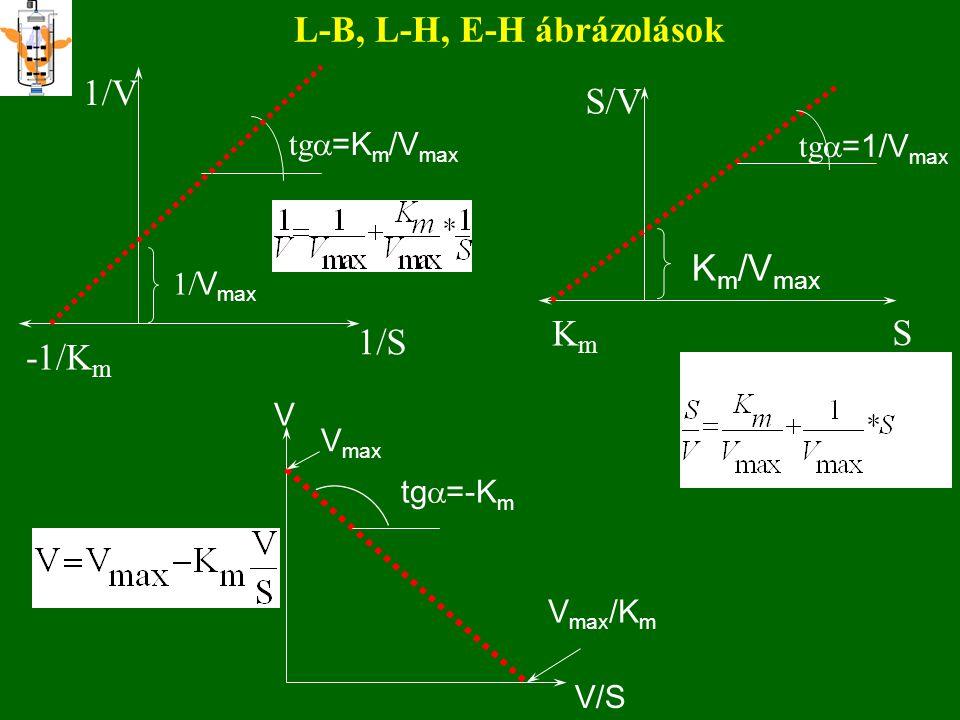 Paraméterbecslés 4 V V/S V max tg  =-K m V max /K m 4. EADIE-HOFSTEE módszerlinearizálás V V/S V max tg  =-1/K m V max /K m