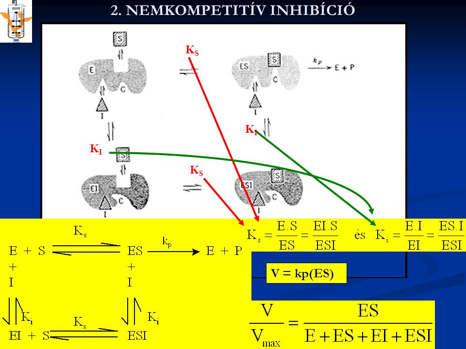 Az inhibitor az enzimnek egy másik kötő helyéhez kapcsolódik és nem befolyásolja a szubsztrát kötődését -- nem változtatja meg az enzimnek a szubsztráthoz való affinitását.