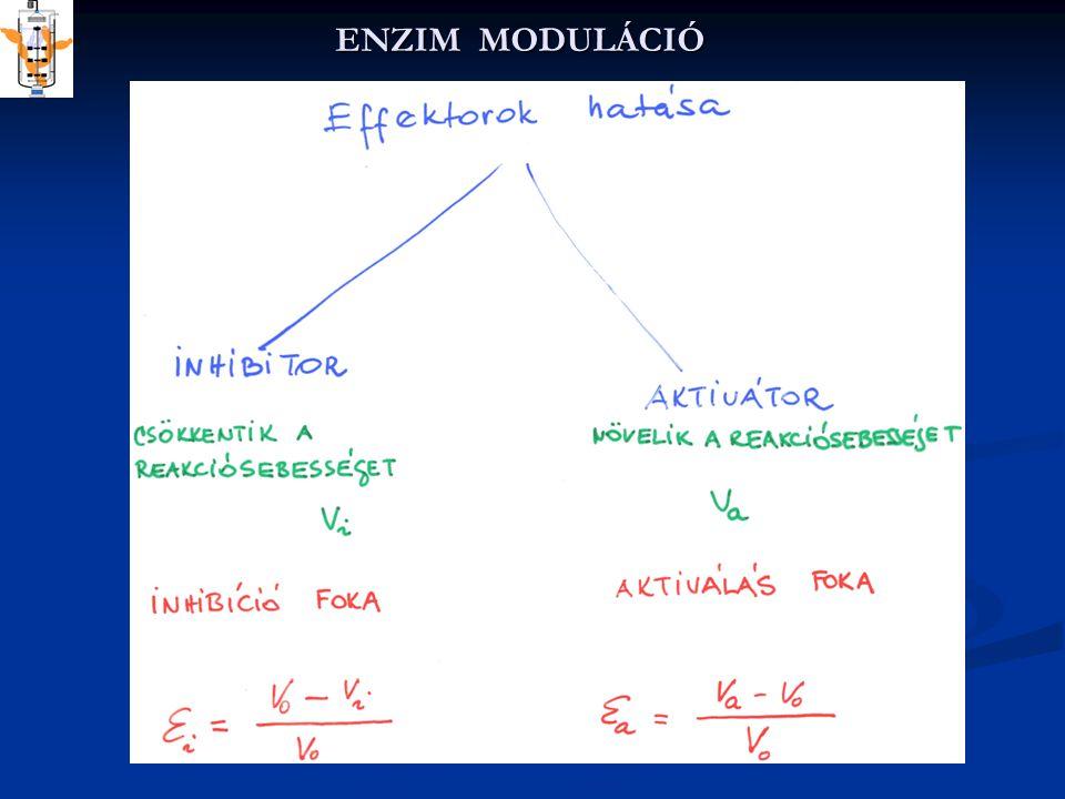 ENZIM MODULÁCIÓ