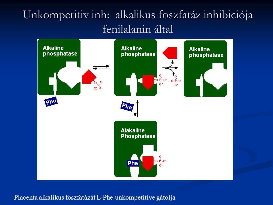 Unkompetitiv inh: alkalikus foszfatáz inhibiciója fenilalanin által Placenta alkalikus foszfatázát L-Phe unkompetitive gátolja