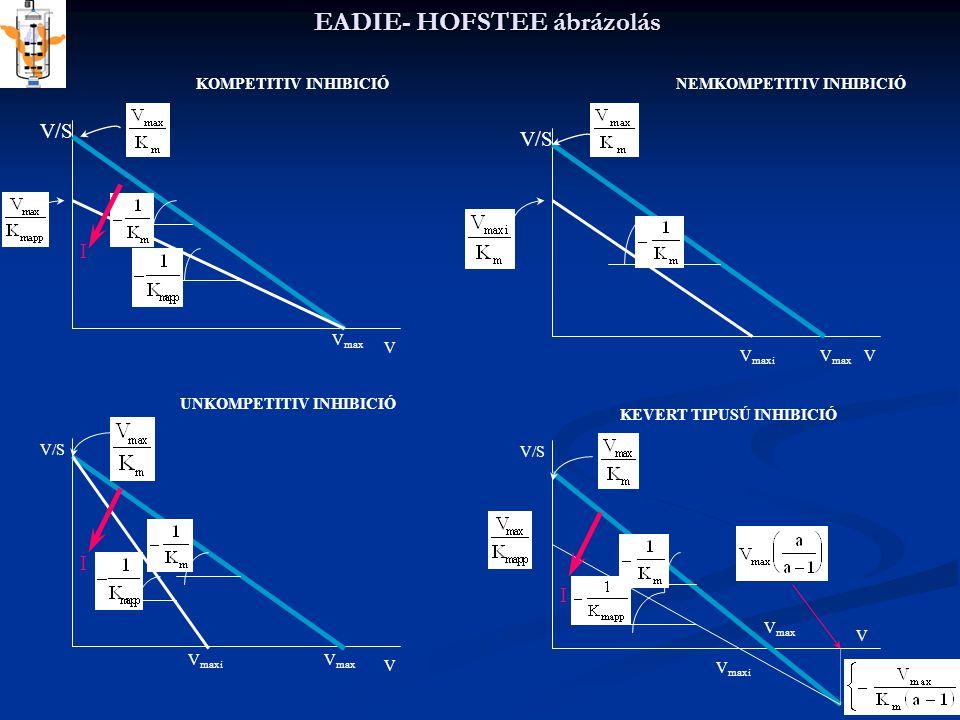 EADIE- HOFSTEE ábrázolás V/S V V V V V max I KOMPETITIV INHIBICIÓNEMKOMPETITIV INHIBICIÓ V max V maxi V max V maxi I UNKOMPETITIV INHIBICIÓ KEVERT TIP