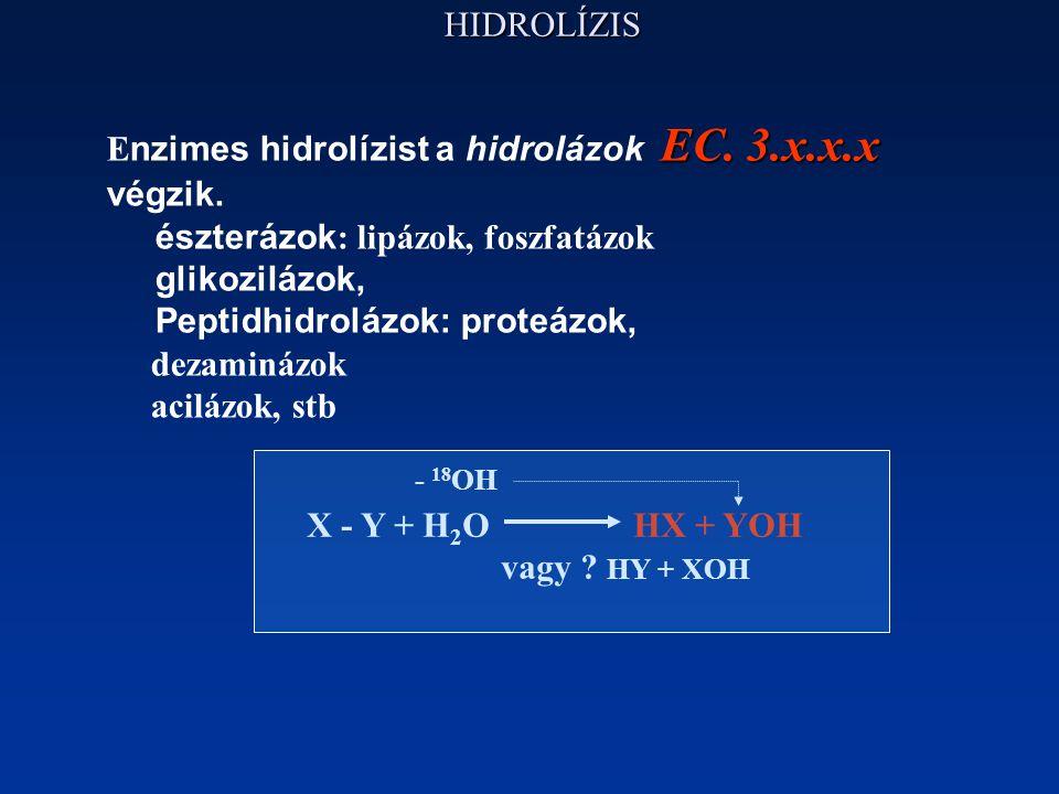 HIDROLÍZIS EC. 3.x.x.x E nzimes hidrolízist a hidrolázok EC. 3.x.x.x végzik. észterázok : lipázok, foszfatázok glikozilázok, Peptidhidrolázok: proteáz