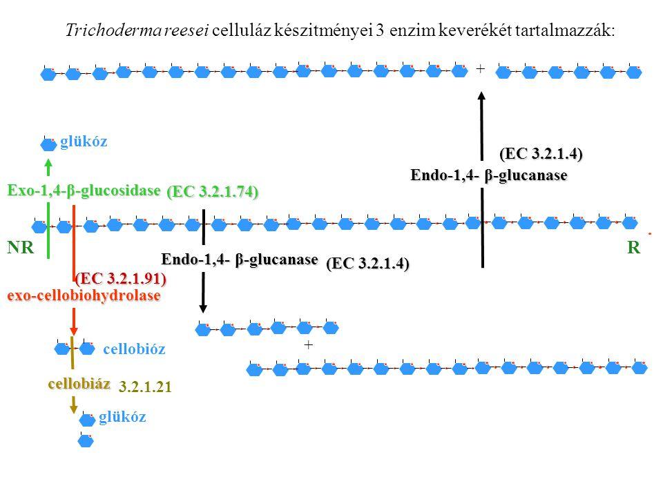 (EC 3.2.1.4) (EC 3.2.1.74) (EC 3.2.1.91) 3.2.1.21 Trichoderma reesei celluláz készitményei 3 enzim keverékét tartalmazzák: