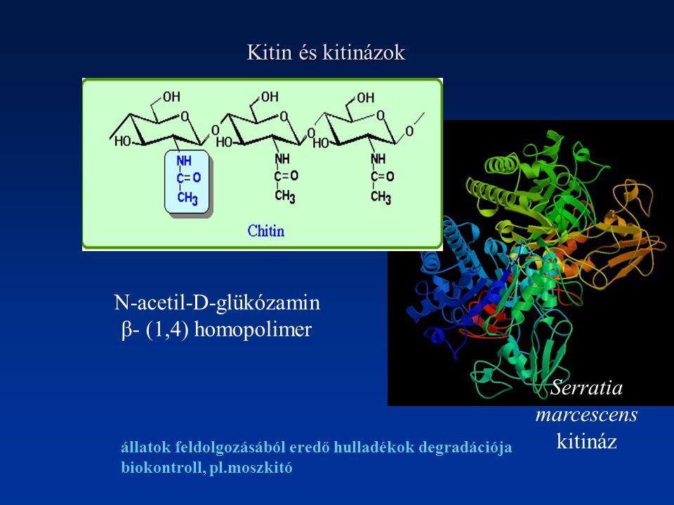Kitin és kitinázok N-acetil-D-glükózamin β- (1,4) homopolimer Serratia marcescens kitináz állatok feldolgozásából eredő hulladékok degradációja biokontroll, pl.moszkitó