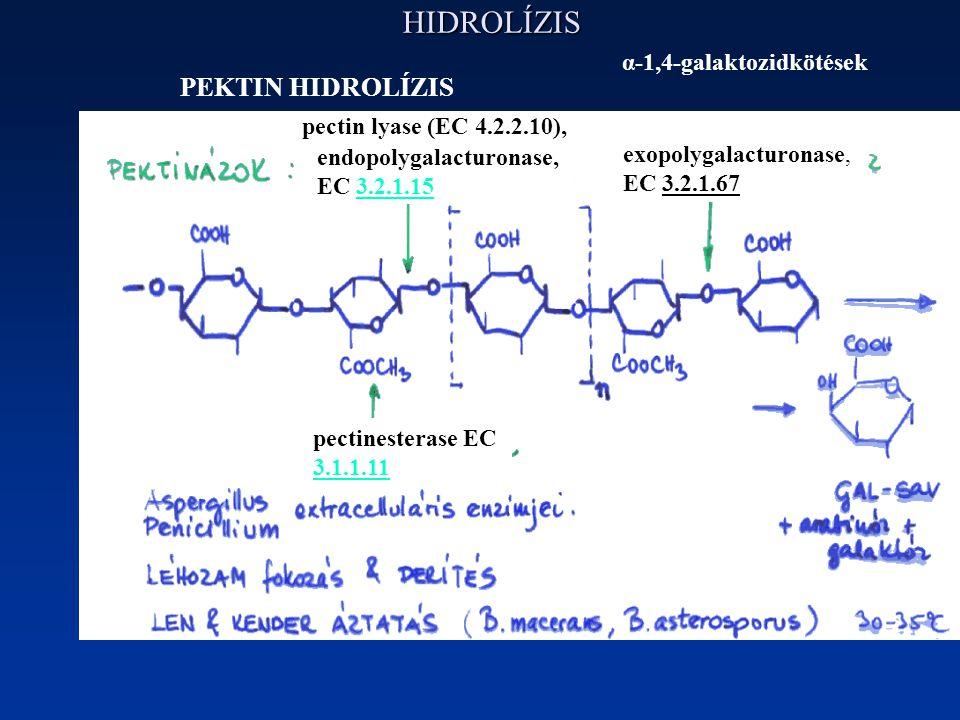 HIDROLÍZIS PEKTIN HIDROLÍZIS exopolygalacturonase, EC 3.2.1.67 endopolygalacturonase, EC 3.2.1.153.2.1.15 pectin lyase (EC 4.2.2.10), pectinesterase EC 3.1.1.11 α-1,4-galaktozidkötések