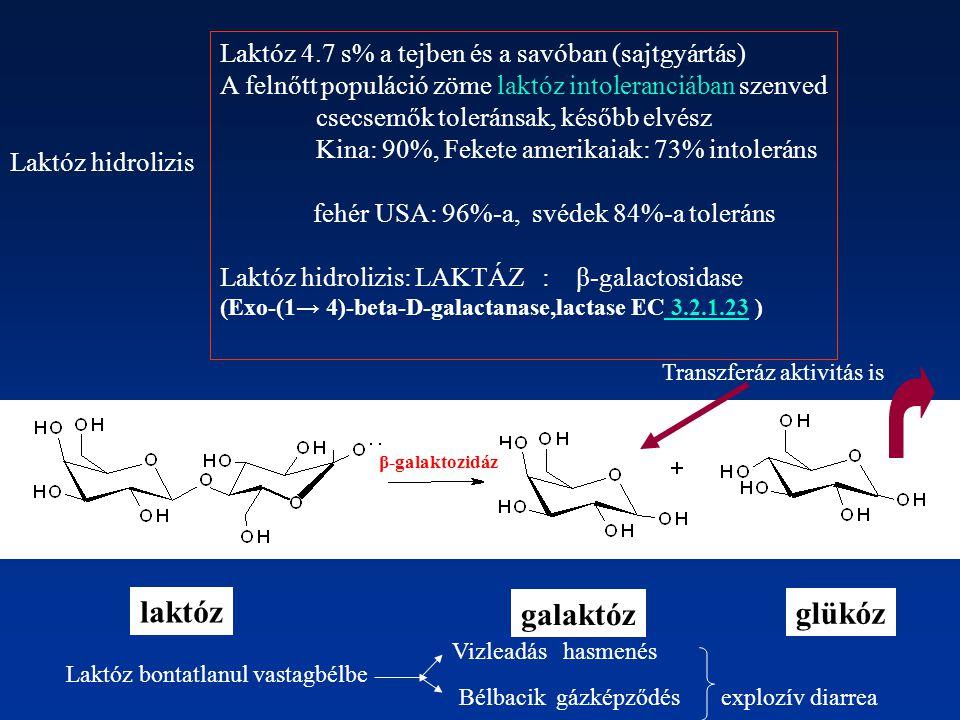 Laktóz 4.7 s% a tejben és a savóban (sajtgyártás) A felnőtt populáció zöme laktóz intoleranciában szenved csecsemők toleránsak, később elvész Kina: 90%, Fekete amerikaiak: 73% intoleráns fehér USA: 96%-a, svédek 84%-a toleráns Laktóz hidrolizis: LAKTÁZ : β-galactosidase (Exo-(1→ 4)-beta-D-galactanase,lactase EC 3.2.1.23 ) 3.2.1.23 Laktóz hidrolizis Transzferáz aktivitás is Laktóz bontatlanul vastagbélbe Vizleadás hasmenés Bélbacik gázképződés explozív diarrea laktóz galaktóz glükóz β-galaktozidáz