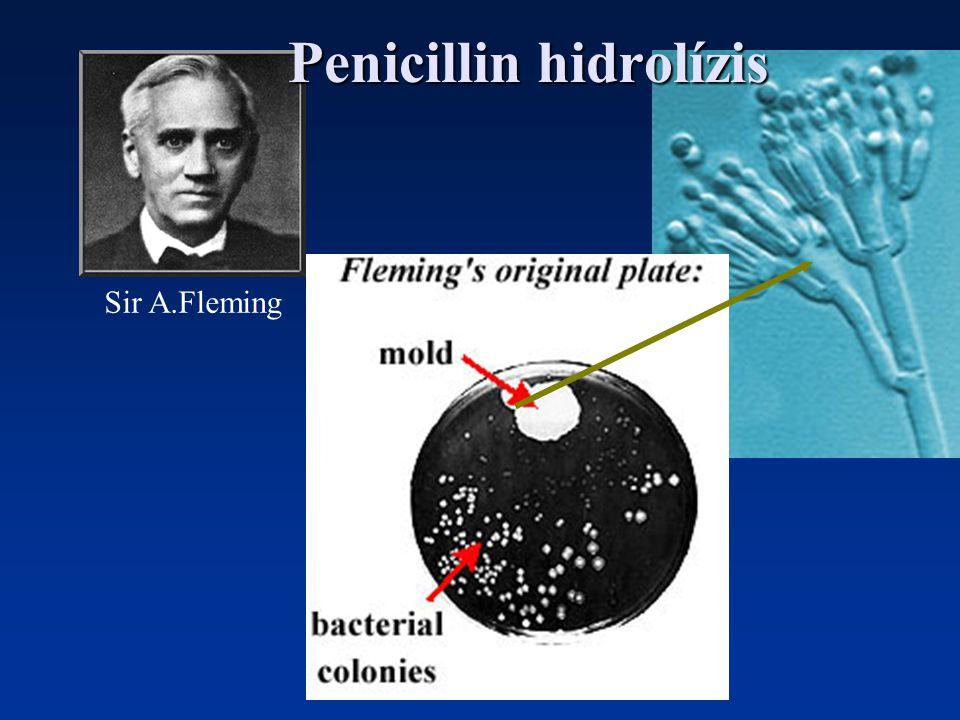 Sir A.Fleming Penicillin hidrolízis