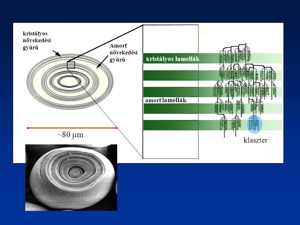 k ristályos lamellák amorf lamellák Amorf növekedési gyűrű kristályos növekedési gyűrű ~80 μm klaszter