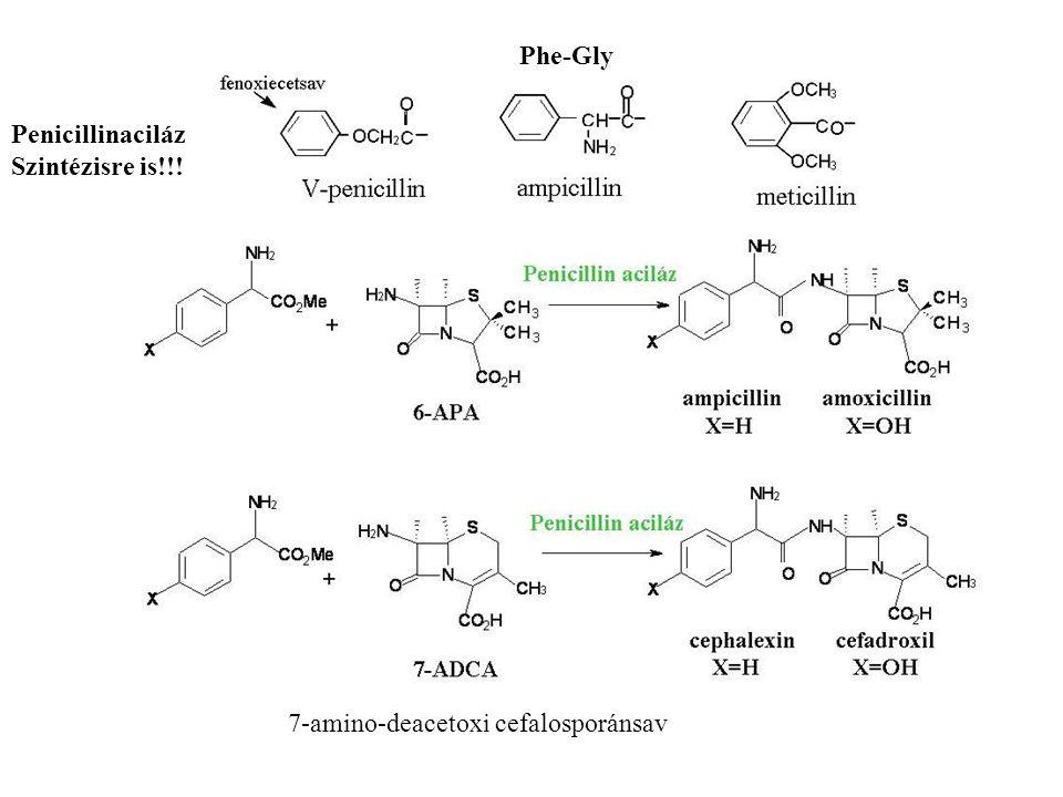 Penicillinaciláz Szintézisre is!!! Phe-Gly 7-amino-deacetoxi cefalosporánsav