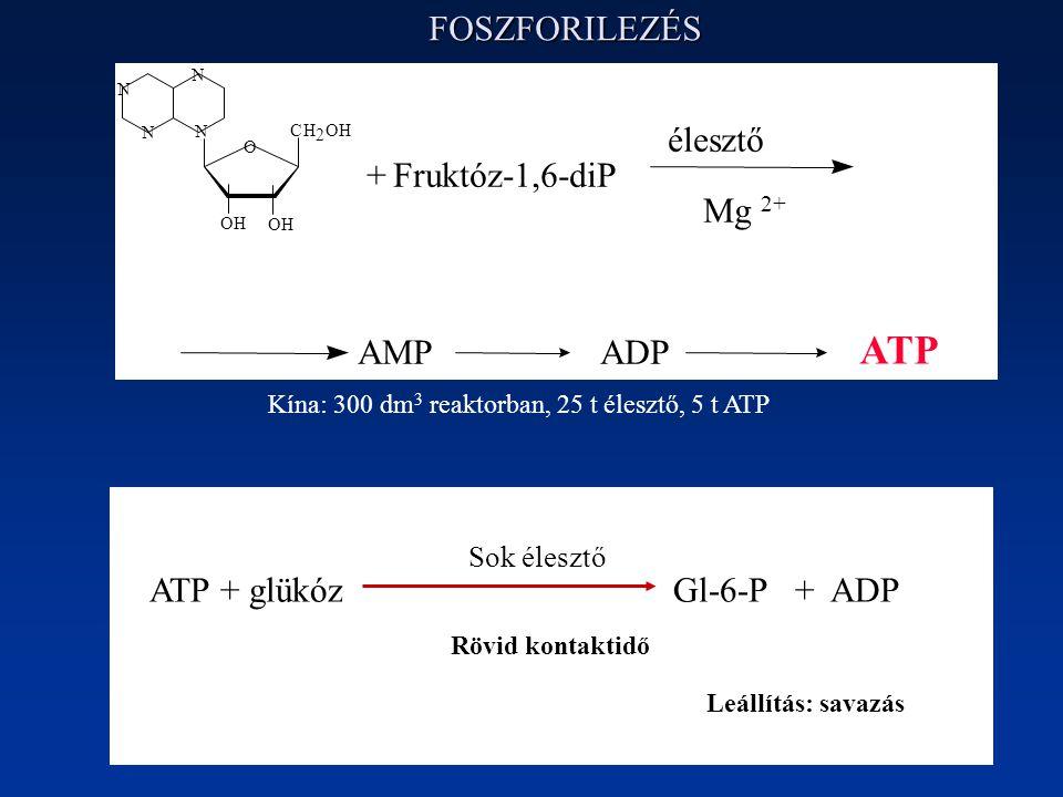 FOSZFORILEZÉS ATP + glükóz Gl-6-P + ADP Sok élesztő Rövid kontaktidő Leállítás: savazás AMP ADP ATP N N N N O CH 2 OH OH OH +Fruktóz-1,6-diP élesztő Mg 2+ Kína: 300 dm 3 reaktorban, 25 t élesztő, 5 t ATP