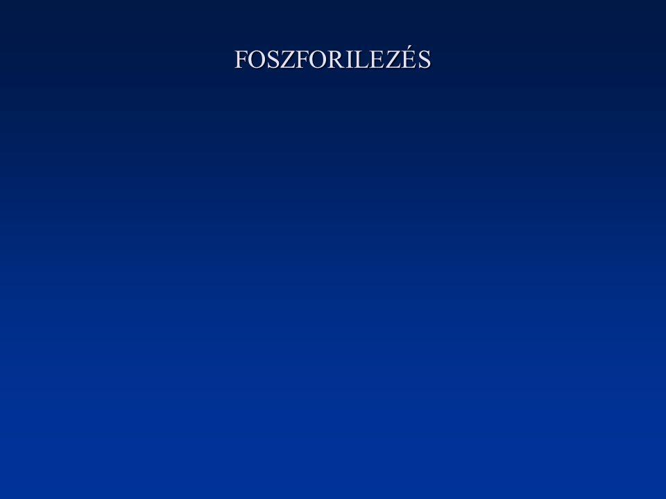 FOSZFORILEZÉS