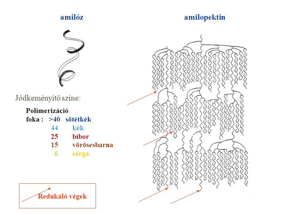amilózamilopektin Jódkeményítő színe: Polimerizáció foka : >40 sötétkék 44kék 25bíbor 15vörösesbarna 6sárga Redukáló végek