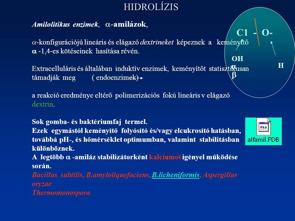 HIDROLÍZIS Amilolitikus enzimek,  -amilázok,  -konfigurációjú lineáris és elágazó dextrineket képeznek a keményítő  -1,4-es kötéseinek hasítása révén.