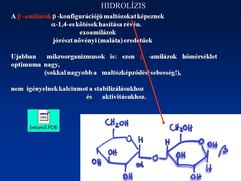 HIDROLÍZIS A  -amilázok  -konfigurációjú maltózokat képeznek  -1,4-es kötések hasítása révén. exoamilázok jórészt növényi (maláta) eredetűek Ujabba